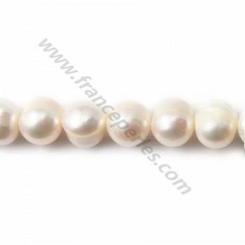 White round freshwater pearl 10-11mm X 40cm