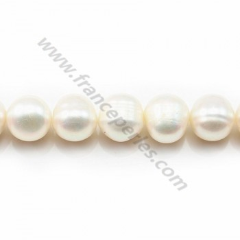 White round freshwater pearls on thread 11-12mm x 40cm